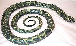 Snakes Sssss